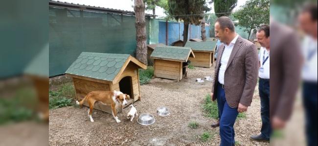 Sokak Hayvanları Güvenilir Ellerde