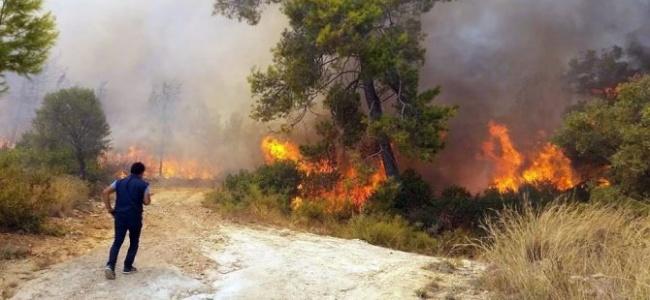 Aydın ve Muğla Ormanları Bayramda Büyük Zarar Gördü