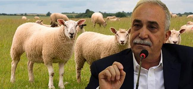 Bakan Fakıbaba Açıkladı Bu Yıl 500 Bin Koyun Verilecek