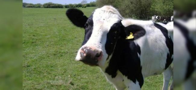Tarım Bakanlığı'ndan İthal Ette 'Deli Dana' Hastalığı Açıklaması!