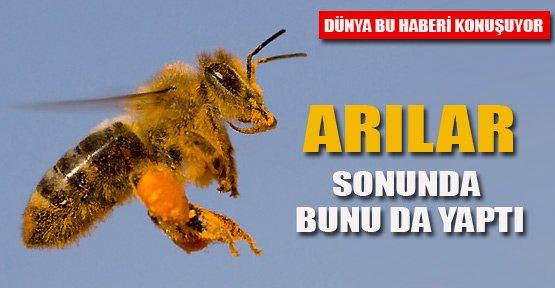 AIDS'e Arılarla Çözüm
