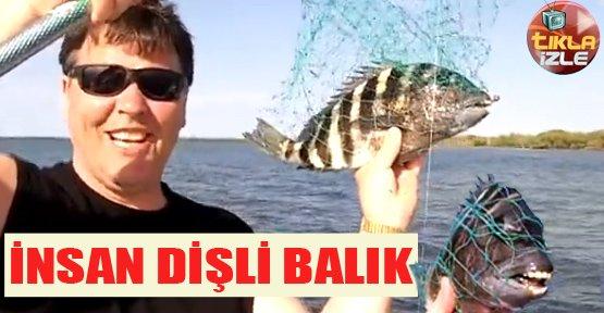 İnsan Dişli Balık