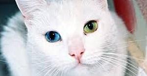 Erkek ve Dişi Kedi İsimleri