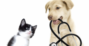 Evcil Hayvanlarımızın Tedavi İhtiyacı