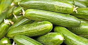 Ocak ayında en fazla salatalık fiyatı arttı
