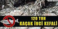 Van'da 120 Ton Kaçak İnci Kefali