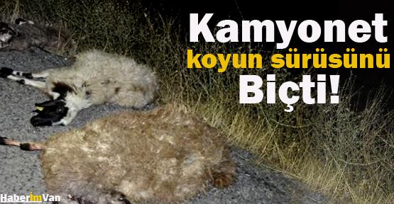 Van'da Kamyonet Koyun Sürüsünü Biçti