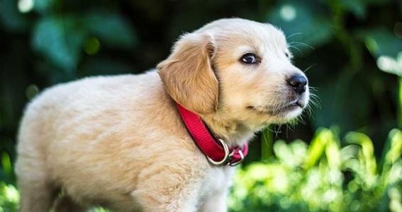 En Güzel Köpek İsimleri Petsbook.com'da