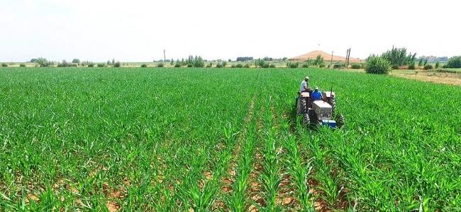 Türkiye'nin 8 Aylık İhracatına Tarım Sektörü Damgası