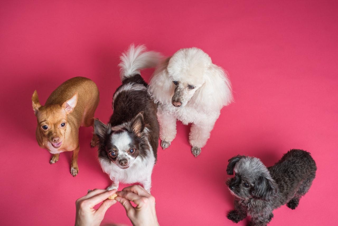 Avrupa Yakası Köpek Eğitim Merkezi
