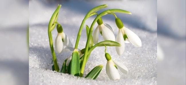 Kardelen Çiçeği Hikayesi
