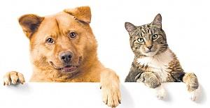 Satılık Evcil Hayvan