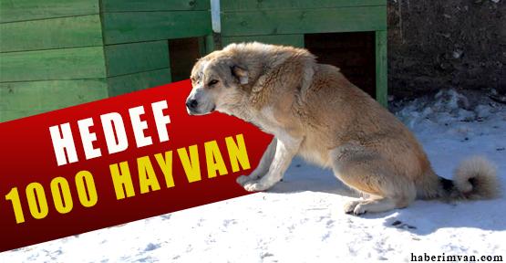 Van Belediyesi Sokak Hayvanlarını Unutmadı